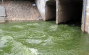 Video: Sông Tô Lịch trong veo, hết mùi hôi thối