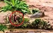 Kinh hoàng cảnh người chồng bị nước lũ cuốn trôi, vợ mắc kẹt giữa dòng nước lũ