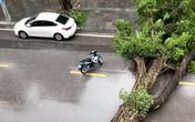 Nhiều cây xanh ở nhiều tỉnh thành bị quật đổ do bão số 3, trời tiếp tục mưa lớn