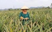 Bất cập trong sử dụng đất tại các nông, lâm trường xứ Thanh: Lãng phí tài nguyên, đi ngược kỳ vọng