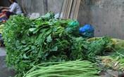 Hà Nội: Rau xanh tăng giá mạnh sau bão, tiểu thương lo lắng thiếu nguồn cung