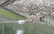 Sau bão số 3, sông Tô Lịch trong xanh nhưng nhiều rác trên bề mặt