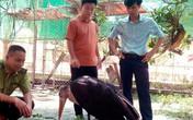 Diễn biến mới vụ chim khổng lồ quý hiếm sa ruộng ở Hà Tĩnh