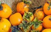 Hồng giòn và những món ăn đượm vị mùa thu ở Đà Lạt