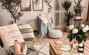 Cách chọn cây cảnh phù hợp với từng phòng để mang lại hiệu ứng thẩm mỹ, trang trí cực chuẩn