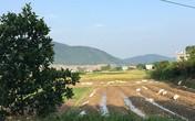 Giá đất xung quanh 'trang trại 300 tỷ' của sư thầy Thích Thanh Toàn đắt thế nào?