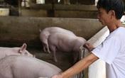Hộ chăn nuôi không còn lợn bán
