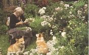 Cuộc sống an yên của cụ bà 92 tuổi bên khu vườn chính mình tự tay trồng hoa, rau quả ở vùng thôn quê