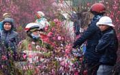 Thời tiết dịp Tết Nguyên đán Canh Tý 2020: Miền Bắc rét đậm, rét hại
