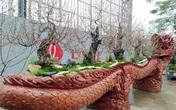 """Video: Mục sở thị chậu đào """"khủng"""" nằm trên mình rồng giá hơn 1 tỷ đồng ở Hà Nội"""