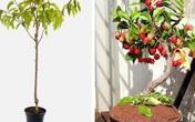 """5 loại cây ăn quả trồng từ hạt """"siêu dễ"""", ai cũng nên trồng 1 cây trong nhà"""