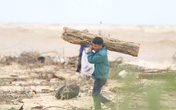 Ảnh: Người dân đổ ra biển nhặt củi trong cơn lũ lịch sử ở Quảng Bình