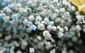 Tặng những loại hoa này đảm bảo vợ, bạn gái cũng phải ngỡ ngàng vì lạ