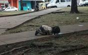 Bức ảnh bé gái quỳ rạp xuống đất, uống nước từ vũng nước bẩn trên đường khiến cả thế giới xót xa và câu chuyện ít ai biết