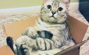 Nữ nhà văn đúc kết được 5 lời khuyên rất hữu ích về tài chính cho cá nhân nhờ vào việc... nuôi mèo