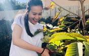 """Dương Mỹ Linh khoe hái """"sương sương"""" cả bồ nhãn nhưng nhìn toàn khu vườn mới choáng"""