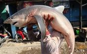 Quán bán chả cá mập suốt 29 năm