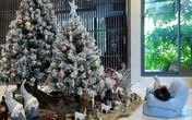 Hình ảnh cô nhóc nhà Cường Đô La nằm thảnh thơi trước cây thông Noel cực đáng yêu