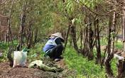 Vào vườn Nhật Tân xem nông dân tuốt lá đào