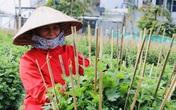 """Làng trồng hoa Tết Dạ Lê Chánh (Thừa Thiên - Huế) """"hồi sinh"""" sau lũ"""