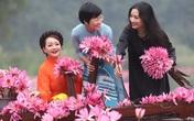 Trà My, Thanh Thanh Hiền và Thảo Vân khoe sắc bên hoa súng ở Tam Cốc