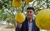 Anh nông dân thu 5 tỷ đồng mỗi năm nhờ 3.000 gốc bưởi Diễn
