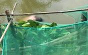Thi thể người đàn ông nước ngoài trôi dưới kênh ở Bạc Liêu