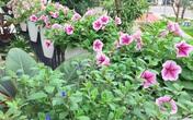 Không gian sống ngát hương bên khu vườn ngập tràn nắng ấm và rực rỡ sắc hoa ở Hà Nội