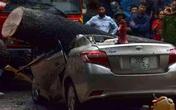 Xà cừ bật gốc trong cơn mưa to, đè bẹp chiếc xe Toyota Vios ở Hà Nội