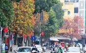 Những hàng cây rực rỡ lá vàng, lá đỏ trên đường phố Hà Nội