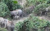 Lần đầu phát hiện đàn voi có cả voi con ở Quảng Nam
