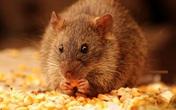 Bắc Giang: Ăn mì tôm tẩm thuốc chuột một người đàn ông tử vong