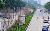 Hàng cây phong lá đỏ đường Trần Duy Hưng, Nguyễn Chí Thanh khô cằn, xơ xác đến thảm hại