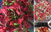 Kỳ lạ loài hoa nở đỏ rực vào mùa hè lại bất ngờ trở thành món ăn gây sốt