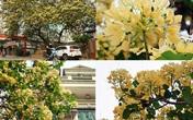 Mục sở thị cây hoa bún duy nhất có tuổi thọ 300 năm tuổi nở hoa đẹp nao lòng giữa Hà Nội