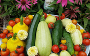 Khu vườn trồng đủ loại rau hữu cơ đẹp như tranh vẽ của bà mẹ dạy các con biết chăm sóc bản thân bằng cách làm vườn