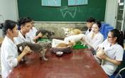 Cụ bà U90 suốt 7 năm mở phòng khám châm cứu chữa bệnh cho thú cưng miễn phí