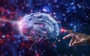 Cân nặng ảnh hưởng thế nào đến não? Kết quả đáng sợ khi quét não