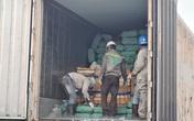Hải Phòng: Cận cảnh tiêu hủy... 24 tấn nội tạng, tai, mũi và lưỡi lợn nhiễm tả lợn Châu Phi