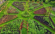 Khu vườn đẹp đến mê mẩn của chàng trai trẻ với niềm đam mê duy nhất trong đời là trồng cây và hoa