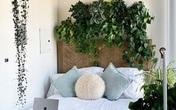 Gia chủ khiến ai cũng ngạc nhiên với hơn 50 loại cây phủ xanh căn hộ 120 mét vuông của mình