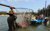 Nghề bắt phi kiếm tiền triệu ở Quảng Nam