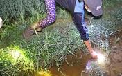 Người phụ nữ Hà Tĩnh đêm khuya mò ra cánh đồng bắt con vật này kiếm 300.000 đồng/ngày