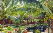 Ngôi nhà làm từ 4000 trái dừa có chi phí xây dựng lên đến 6 tỷ ở Vĩnh Long và tâm nguyện của chủ nhà khiến ai cũng bất ngờ