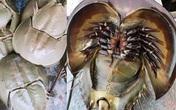 Bọ biển 'khổng lồ' 1 triệu đồng/đôi, đặc sản lạ hút khách sành ăn
