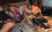 Chó cưng đang chơi ngoài sân thì lao đến như thể tấn công cô chủ nhỏ 7 tuổi, bà ngoại chạy tới thì thấy toàn thân con vật đầy máu
