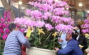 Hà Nội: Người dân nườm nượp mua sắm Tết sớm tại chợ hoa Vạn Phúc