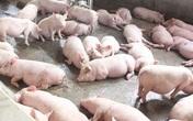 Siết chặt việc vận chuyển lợn trái phép qua biên giới