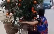 Người phụ nữ đu bám sau xe máy chở quất Tết để giữ cân bằng khiến cư dân mạng sợ hãi!