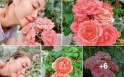 Ốc Thanh Vân khoe vườn hồng đẹp kiều diễm